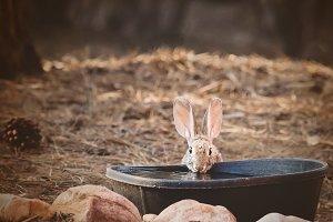 Cute Bunny Looking at Viewer II