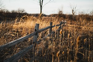 Old Fence at Golden Hour