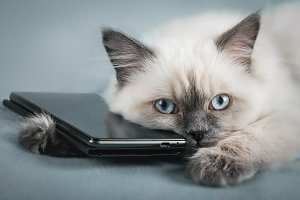 Young cat with smartphone.