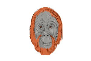 Unflanged Male Orangutan Drawing
