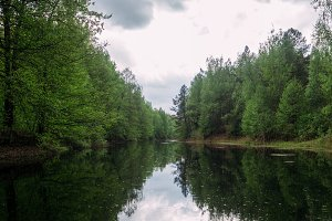 Forest river in Russia