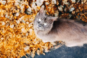grey cat on autumn background.