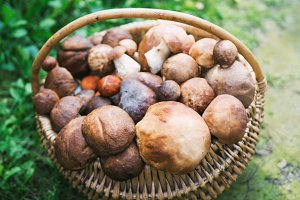 wooden basket with mushrooms