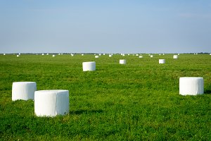 hay on the field. wrapped in white