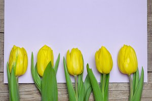Yellow tulips and card for greetings