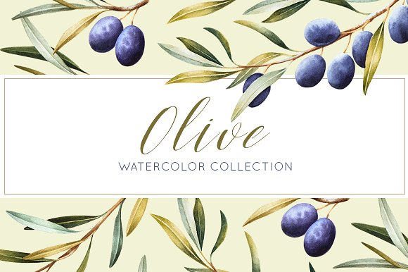 Olive Watercolor Collection