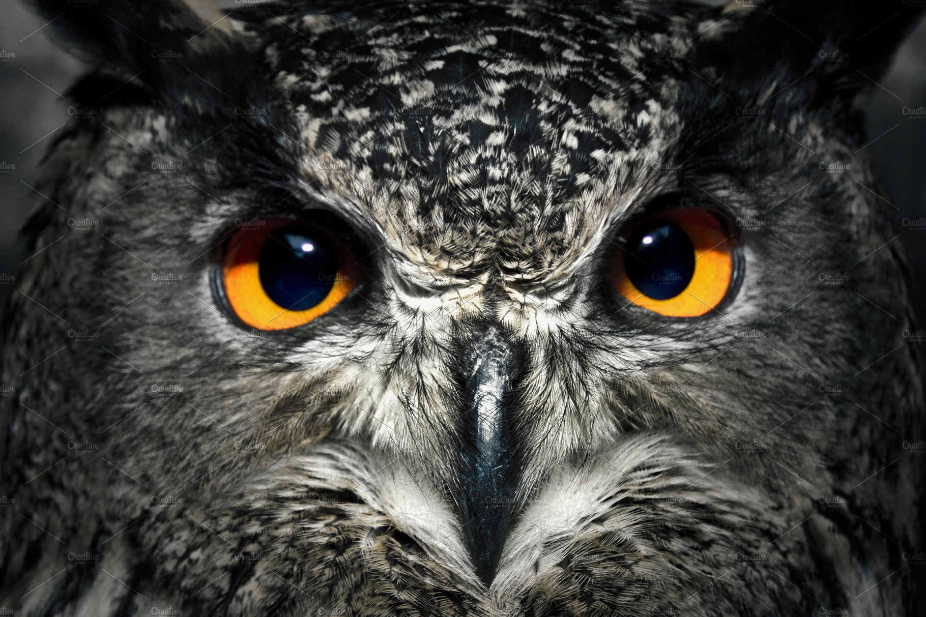 Owl eyes close up. ~ A...