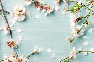 Spring almond blossom flowers