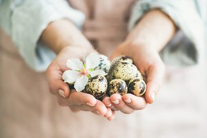 Quail eggs and almond blossom flower