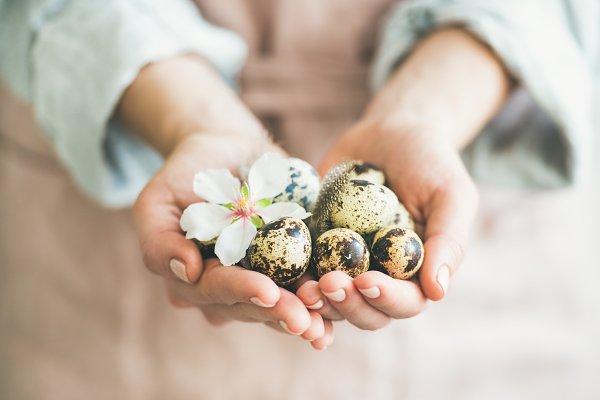 Quail eggs and almond blossom flowe…