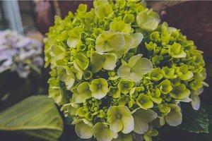 Close up little green flower