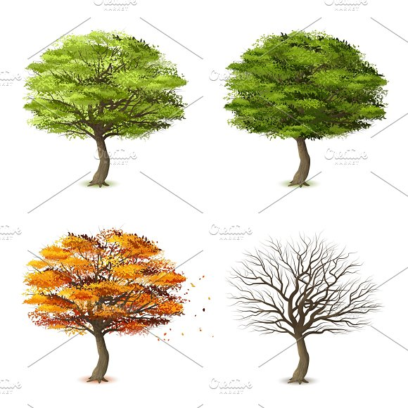 Trees In Four Seasons Set