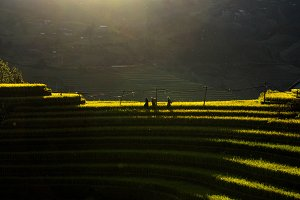 Three undefined Vietnamese Hmong