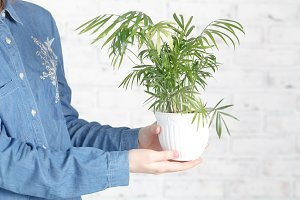 woman cultivating home plants