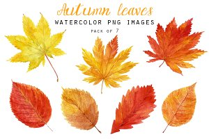 Autumn leaves clipart P1