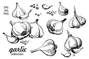 Garlic. Hand drawn