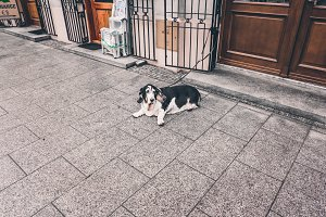 Old dog waiting on the street