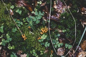 forest soil with moss and mushrooms