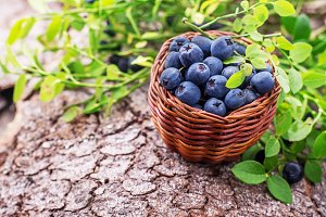 fresh blueberries in a little basket