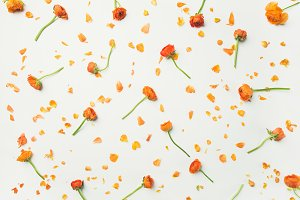 Flat-lay of orange buttercup flowers