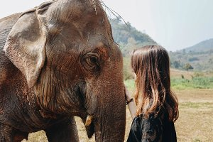 Girl taking care of elephant