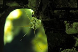 Beautiful aquarium shrimp