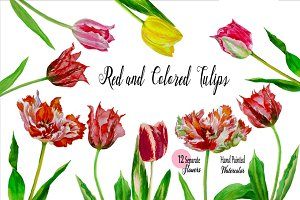 Red Tulips. Watercolor Clip Art