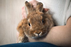Very cute rabbit on the women hand.