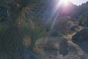 Desert lens flare California