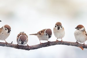 lot of little funny birds sitting