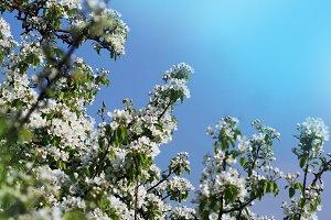 Photo of beautiful plum tree blossom