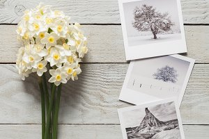Bunch of white narcissus and photos