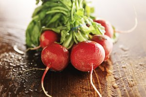 fresh radish bunch on wood