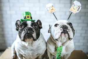 Dogs in disguise St. Patrick's Day