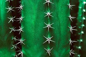 Organic Cactus Texture In Green