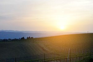 italian vineyard at sunset