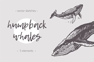 Sketches of humpback whales