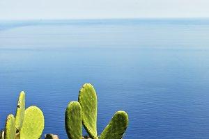 cactus plants with sea