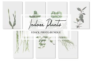 Indoor Plant Photo Bundle