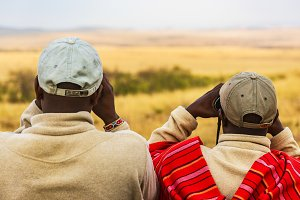 Safari Guides search the landscape