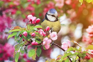 postcard bird in the spring