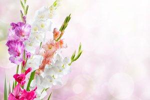 Nature background witn gladiolus