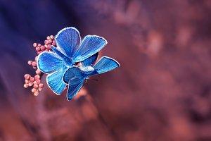 two butterflies on a purple meadow