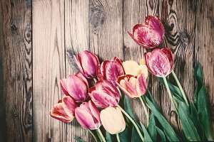 Vintage background with tulip