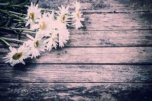 Vintage chamomile flowers
