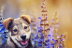 puppy on a flowering meadow