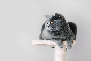 Grey furry cat laying on the top of