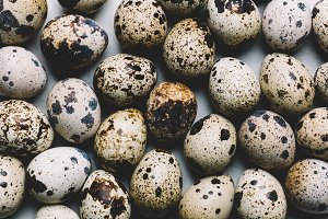 Group of quail eggs with dark spots