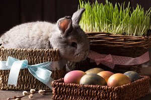 cute easter bunny with easter eggs