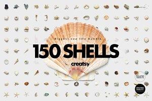 150 Shells Bundle (isolated objects)